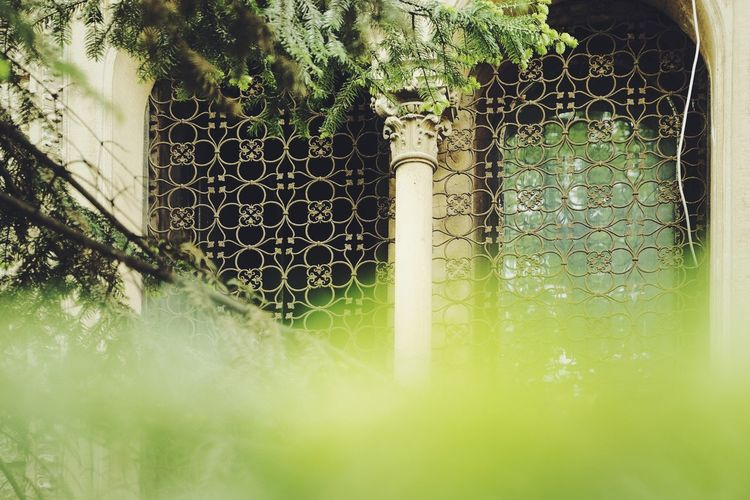 Close-up of plants seen through chainlink fence