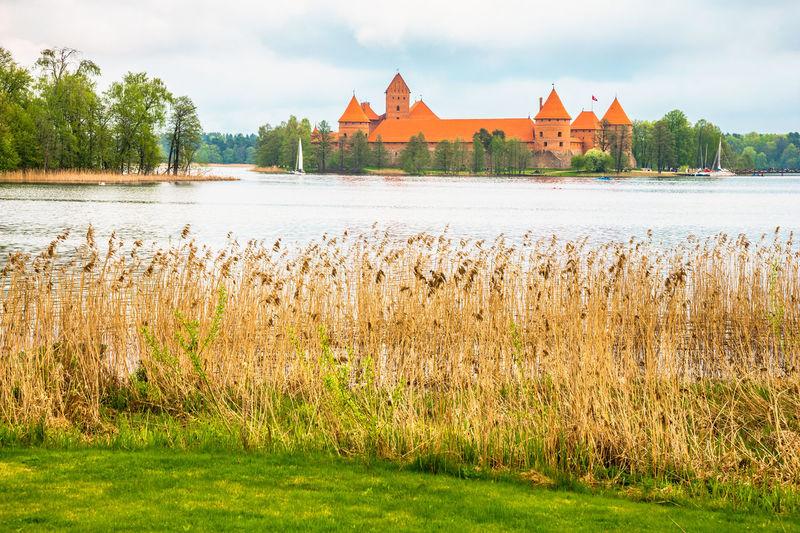 Plants at lake galve against trakai island castle