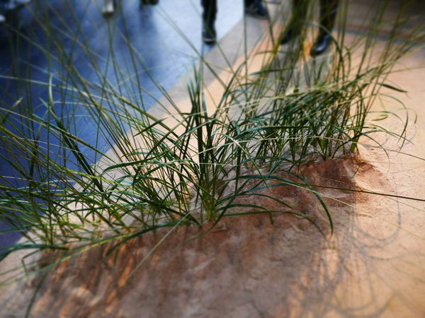 Grass Beach Close-up Day Nature No People Outdoors Selective Focus Situation
