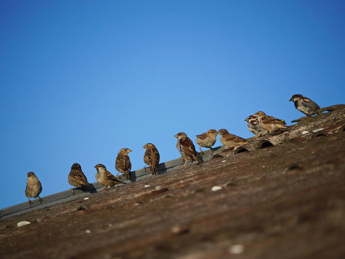 Low angle view of birds perching on wood against blue sky