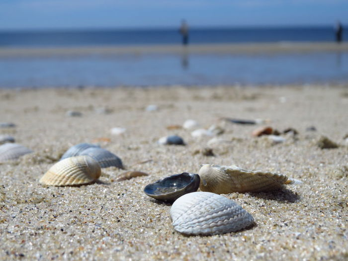 Close-up of snail on beach