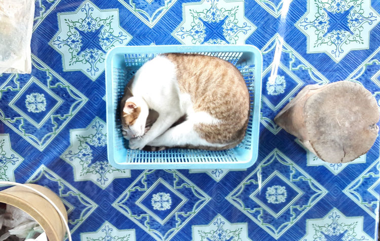 cat Cat & Dog Cats 🐱 Cat Photography