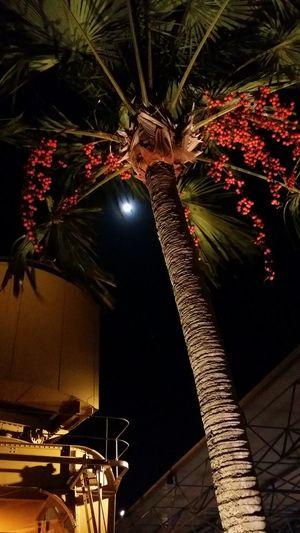 Autumn Colors Moonlight Tree Orange