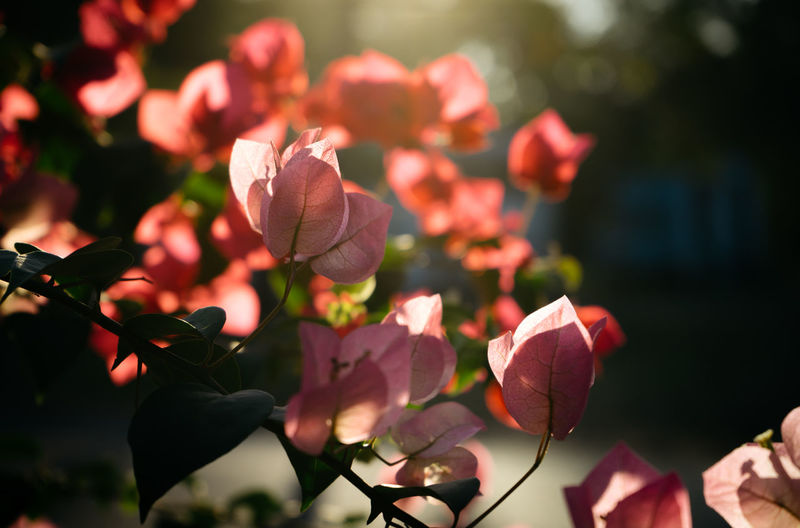 Close-up of flowers blooming in park during sunny day