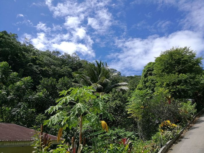 Growth Nature Green Color Tree No People Outdoors Cloud - Sky Sky Day Plant Beauty In Nature Freshness Colour Scenics Aesthetic Jungle Paradise Tourism Adventure Seychelles Tropical Paradise Exploration Travel Destinations Berjaya Beach Seychelles Tropical Climate