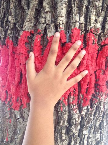 Mix Yourself A Good Time Human Hand Red Human Body Part Human Finger One Person Real People Tree Trunk Touching Textured  Close-up Day Lifestyles Outdoors Nail Polish Adult People IPhoneography The Week On EyeEm Childhood Temple Cultures Tradition Praying Hindu Culture