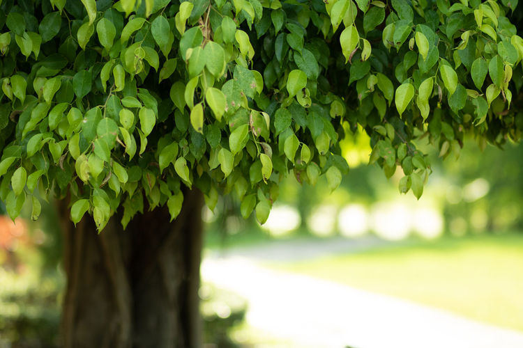 Close-up of fresh green plant in park