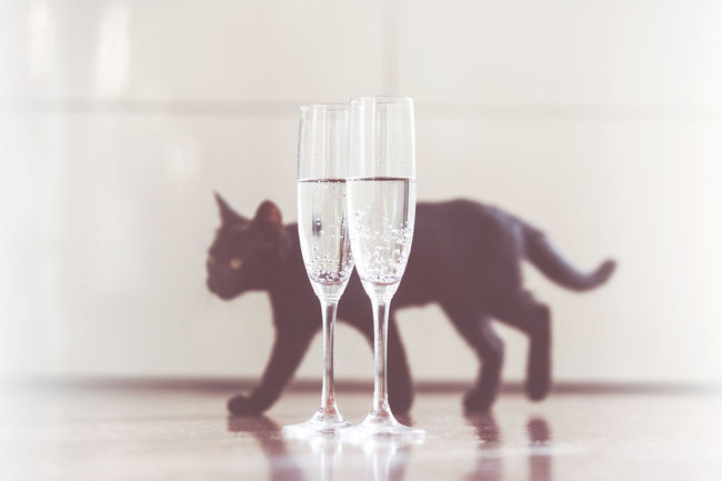 Bad Luck Black Cat Champagne Good Luck New Year Black Cat Collection Black Cat Photography Concept Good Luck Charm Good Luck Symbol Retro Styled Vintage