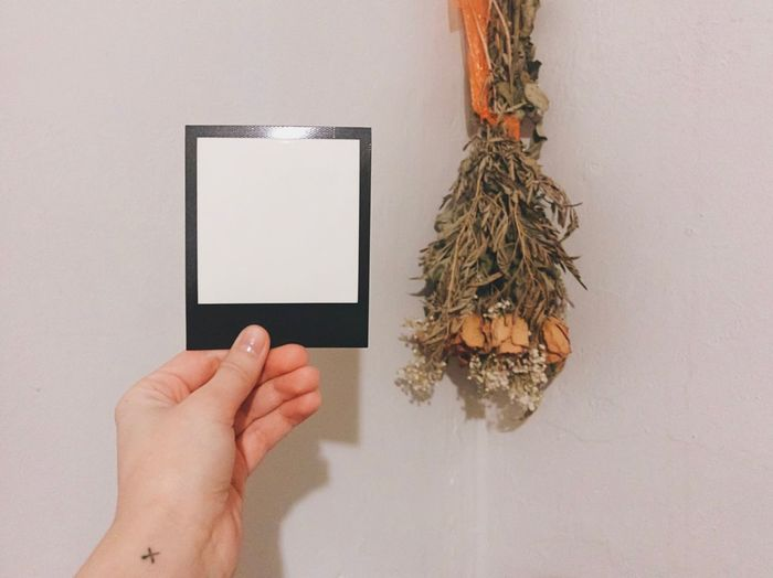 Close-Up Of Hand Holding Instant Print Transfer Against Flowers Hanging On Wall