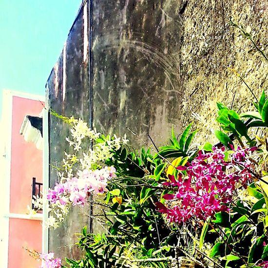 Oldsanjuan Puerto Rico Distressed Walls Flowers