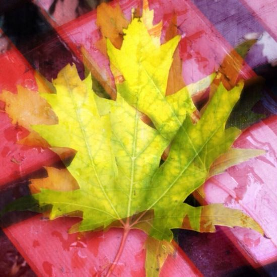 Double Exposure Tales Of Us Goldfrapp Colors Of Autumn