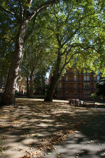 Trees and leaves in park by building in city