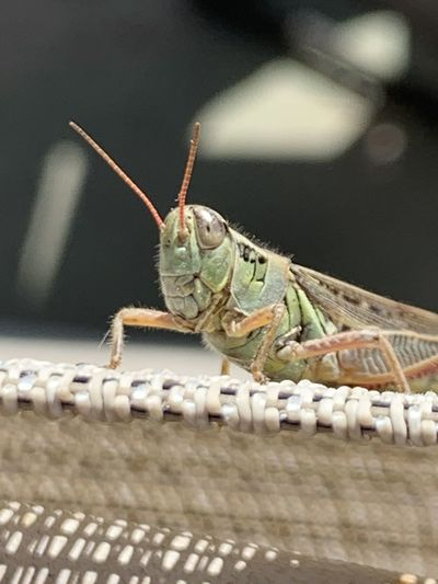 Close-up of an insect