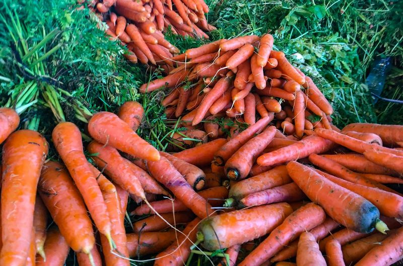 High angle view of carrots for sale at market