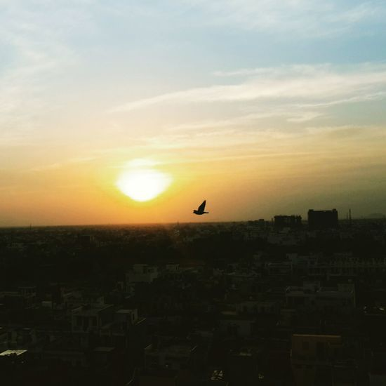 Sunset Birds🐦⛅ Bird Photography Evening Sky Outdoors No People Building Exterior Beauty In Nature Sunset_collection PhonePhotography Photography In Motion Love ♥ Hometown Memories Light In The Darkness Incredibleindia Live For The Story