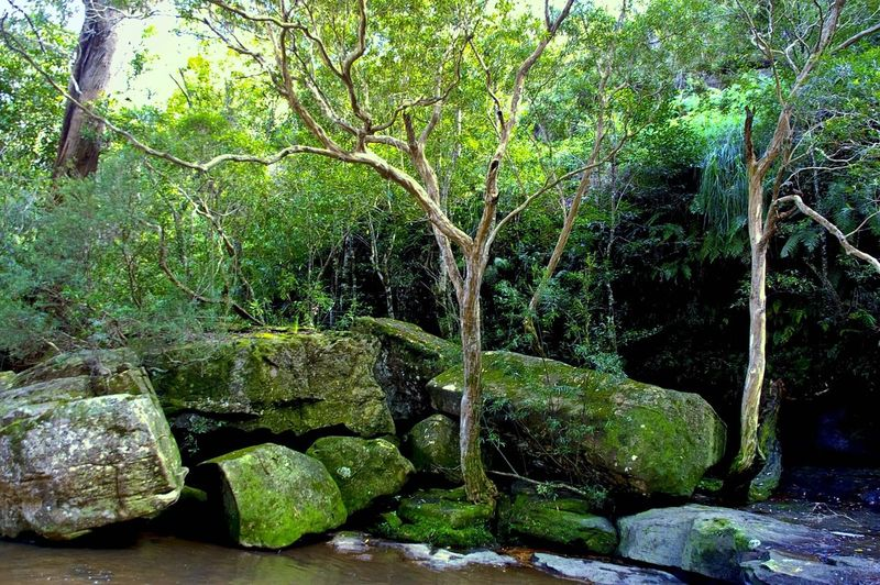 Beauty In Nature Forest Growth Moss Nature No People Non-urban Scene Outdoors Rock Rock Formation Tranquility Tree Water First Eyeem Photo