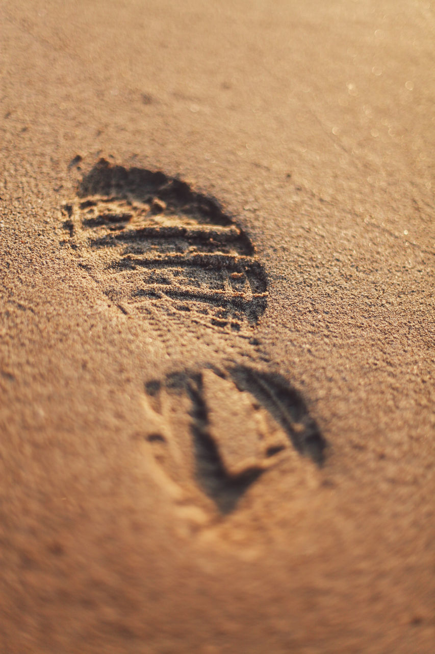 sand, beach, selective focus, close-up, no people, single object, track - imprint, day, nature, outdoors, animal themes, ink