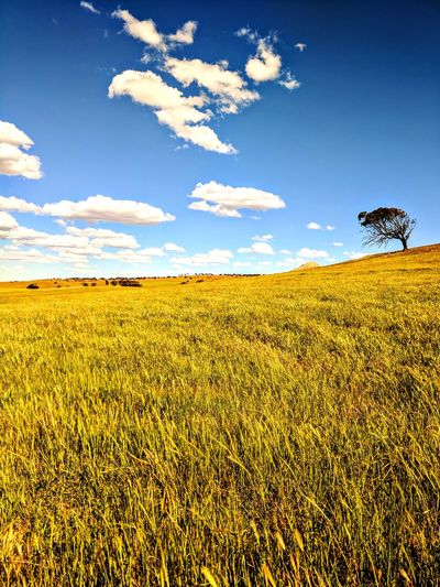 Agriculture Nature Outdoors Rural Scene Sky Cloud - Sky Scenics Field Landscape Beauty In Nature No People Day Growth