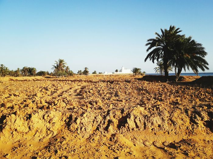 The Week On EyeEm EyeEm Selects Palm Tree Tree Agriculture Outdoors No People Day Nature ڨلالة جربة  تونس Vacations Nature Desert Tranquility Travel Tourism Tree