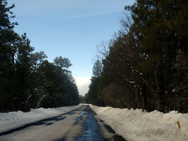 Driveway Driving Through Snow Empty Road On The Road Road Snow On Road Trees Way