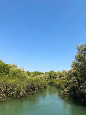 Mangrove in Darwin Harbour, Northern Territory, Australia. Fragile Ecosystem Mangrove Halophytes Rhizophora Rhizophoraceae Water Plant Sky Copy Space Tree Nature Tranquility Clear Sky Beauty In Nature Scenics - Nature No People Tranquil Scene Blue Green Color
