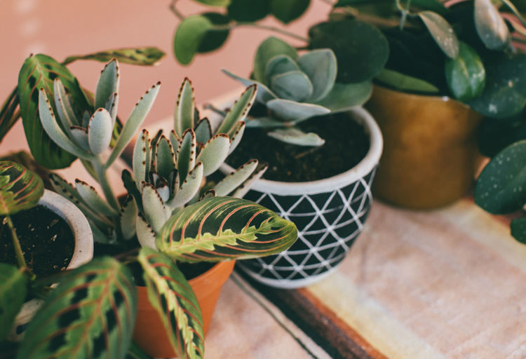 High angle view of potted plants on table at home