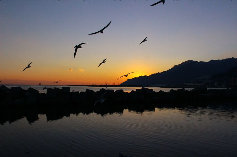 Sunset Nature Bird Flying Animal Wildlife Reflection Water Outdoors Salerno♡ The Great Outdoors - 2017 EyeEm Awards