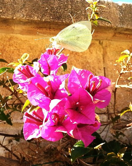Hello World Hanging Out Taking Photos Check This Out Spain, Andalucia Dreamer Eyem Artist Open Edit Open Edit For Everyone Warum Nicht Einfach So? Smartphone Photography Smart Simplicity Fotography Hi! Butterfly Schmetterling Buganville