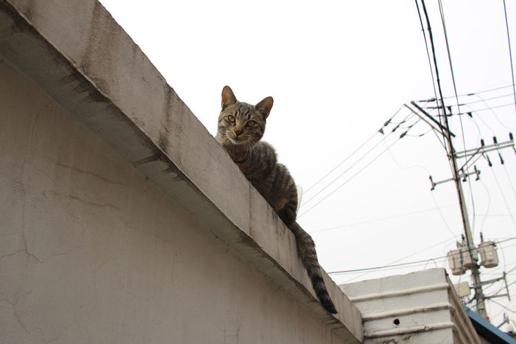 Low angle view of cat on wall against sky