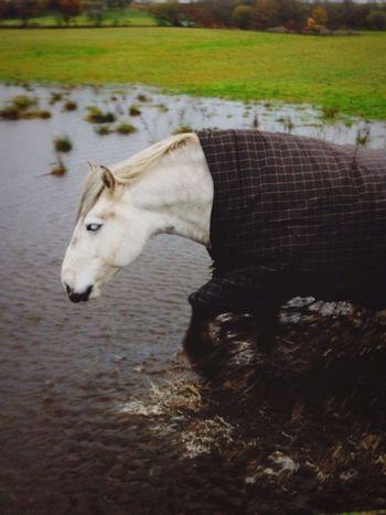 Vrackie Highland Pony Paddling