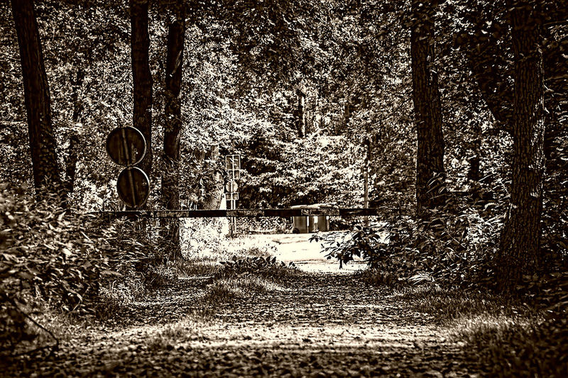 Beauty In Nature Blackanwhite Day Forest Landscape Nature Outdoors Plant The Way Forward Tranquil Scene Tranquility Wald WoodLand Wouden