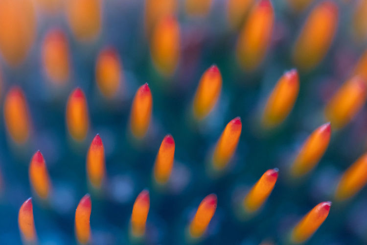 Abstract shot of flower head with orange spikes