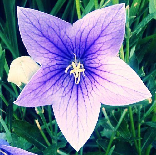 Colour Of Life Flower Bloom Purple Pretty