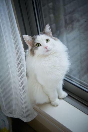 Portrait of cat sitting on window at home