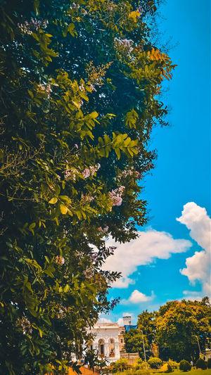 EyeEm Nature Lover Gettyimages EyeEm Selects EyeEm Best Shots Tree Flower Blue Branch Sky