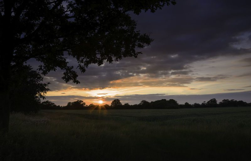 Last Rays Of The Day Beauty In Nature Cloud - Sky Environment Field Growth Idyllic Land Landscape Nature No People Non-urban Scene Orange Color Outdoors Plant Scenics - Nature Silhouette Sky Sunset Tranquil Scene Tranquility Tree