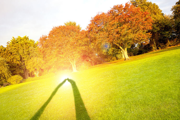 Shadows couple kissing in a autumn landscape Tree Plant Autumn Grass Nature Change Green Color Beauty In Nature Orange Color Day Leisure Activity Growth Sunlight Land Scenics - Nature Golf Course Tranquility Outdoors Tranquil Scene Environment No People