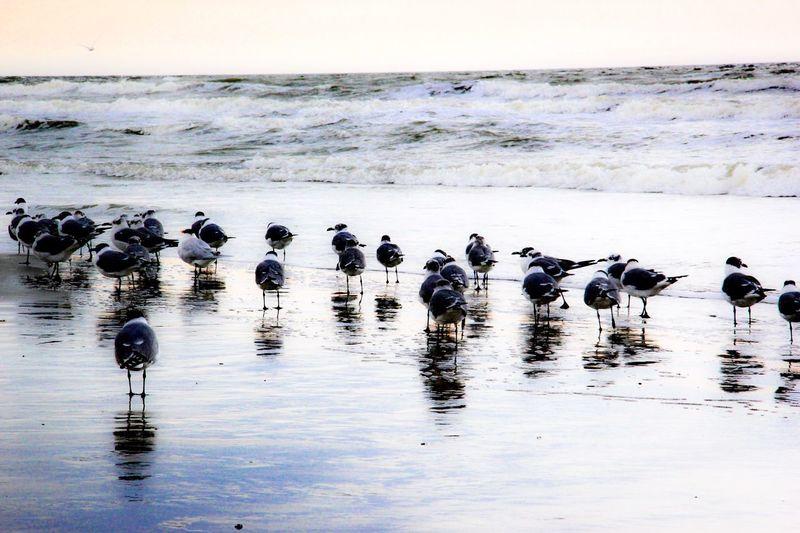 Flock of birds on shore at beach