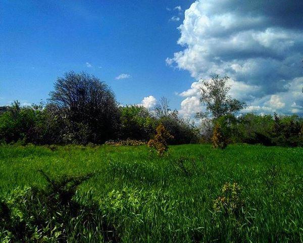 Природа и есть тот источник красоты, которого достается на всех, из которого каждый черпает по мере разумения Природа пейзаж цветы весна деревья красиво Самара фото Лес зелень  цветение небо солнечно прекраснаяпогода май красиваясамара