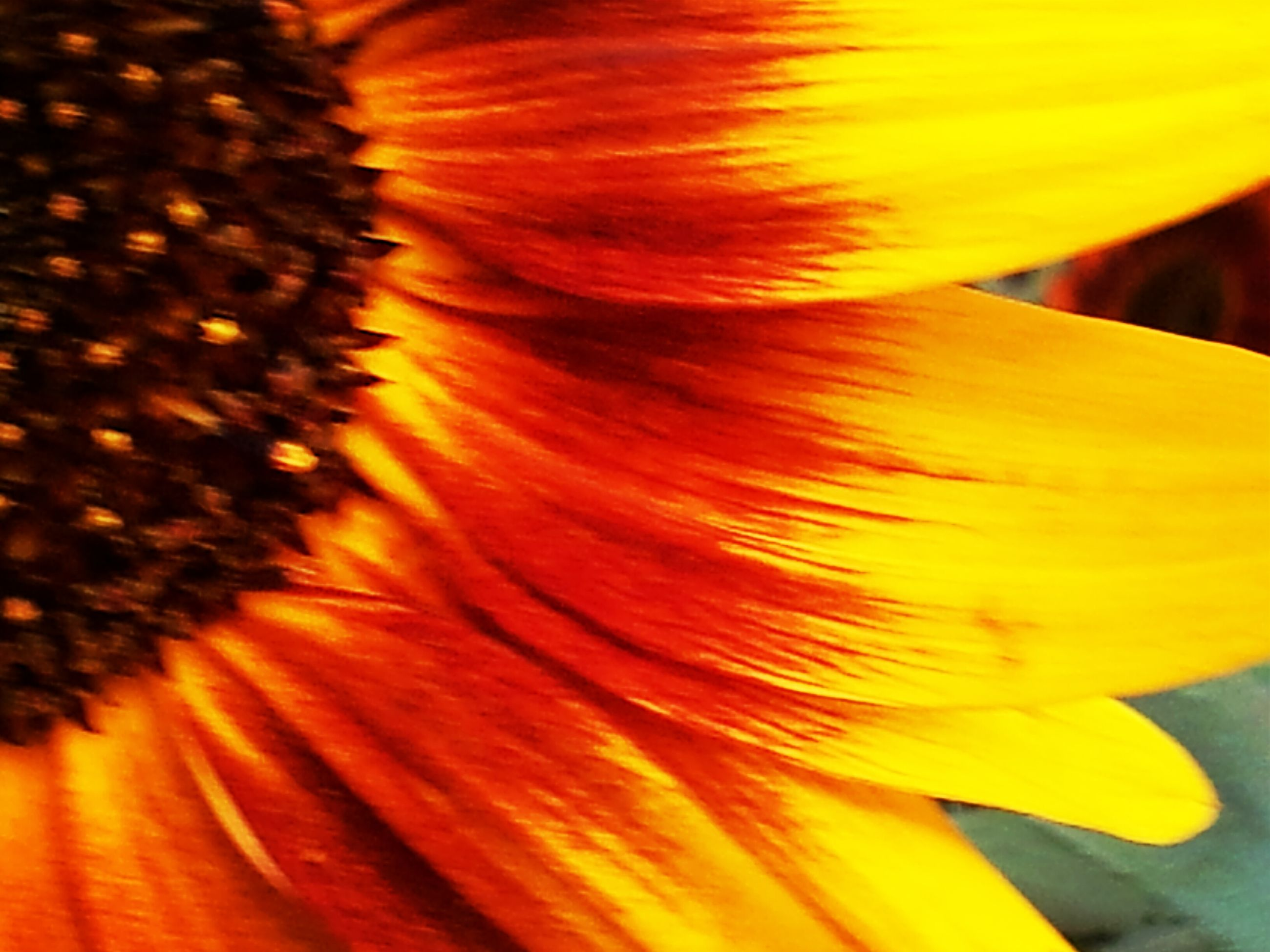 yellow, close-up, flower, petal, orange color, fragility, flower head, beauty in nature, nature, single flower, freshness, selective focus, extreme close-up, macro, full frame, natural pattern, vibrant color, backgrounds, growth, focus on foreground