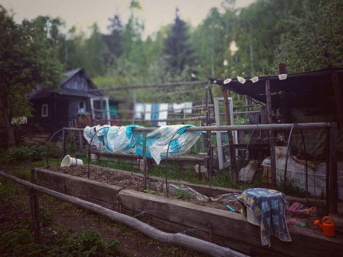 Rural life Garden Garden Photography Rural Scene Rural Vegetable Growing Wood Russia Garden Bed Water Tree
