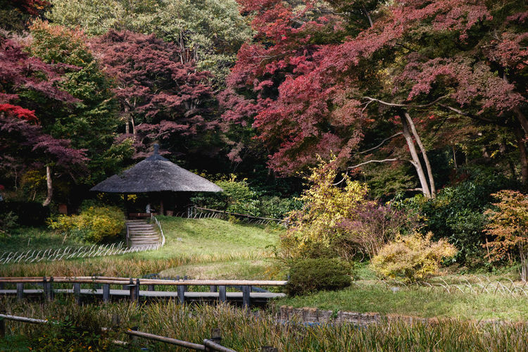 Plant Tree Nature Beauty In Nature Growth Water Tranquility Tranquil Scene No People Day Land Scenics - Nature Japanese Garden Park Built Structure Park - Man Made Space Architecture Forest Grass Outdoors Footbridge
