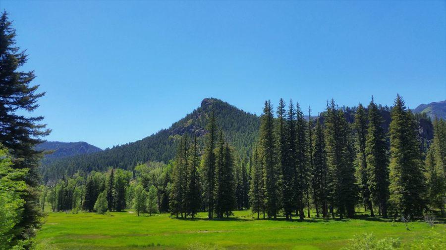 Colorado Beauty
