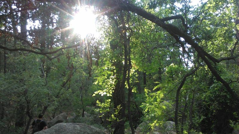 Arizona Mountains Beauty In Nature Day Forest Growth Hualapai Mountain Nature Outdoors Scenics Sunlight Tranquility Tree