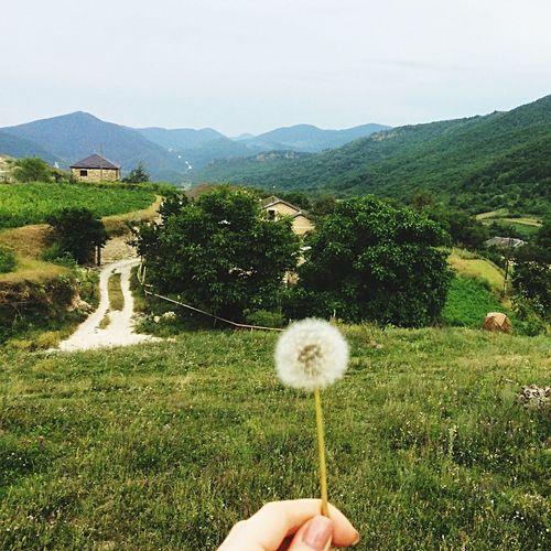 одуванчик горы горыкавказа Дагестан Dagestan сергокалинский район махарги