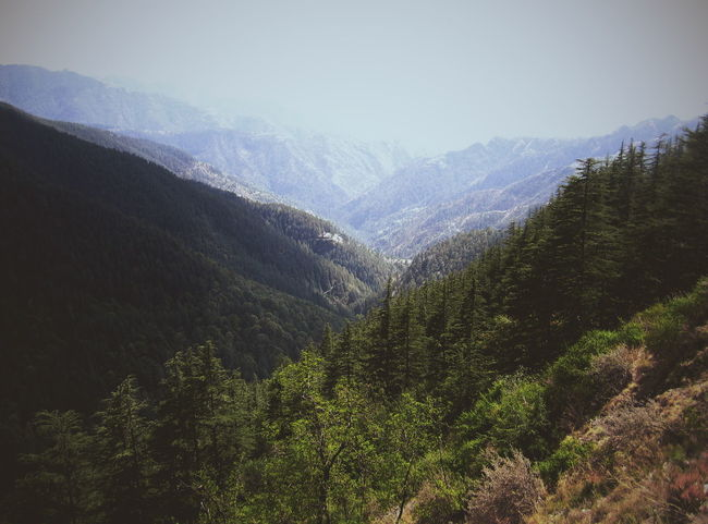 Creaters Art Mountains Shimla India Green Mountain Range Beauty In Nature Trees And Sky Tree Indiapictures North India EyeEm Best Shots Travel Photography Canon 70d Vscocam First Eyeem Photo