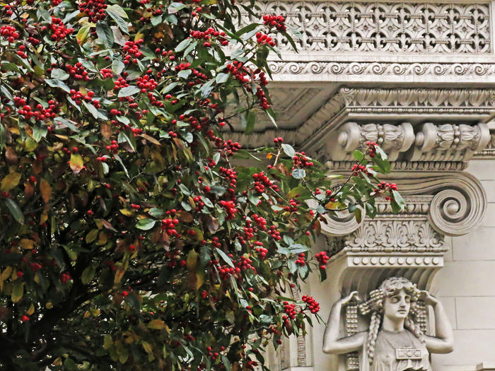 Genoa Genova Modernisme Tree In My Eye Architecture Building Exterior Built Structure Day Genova ♥ Genovacity Gino Coppedè Green Color Growth History Low Angle View No People Outdoors Red Berries Sculpture Statue Travel Destinations Tree