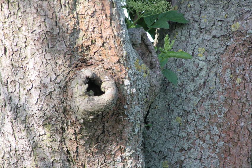 EyeEm Nature Lover Trees