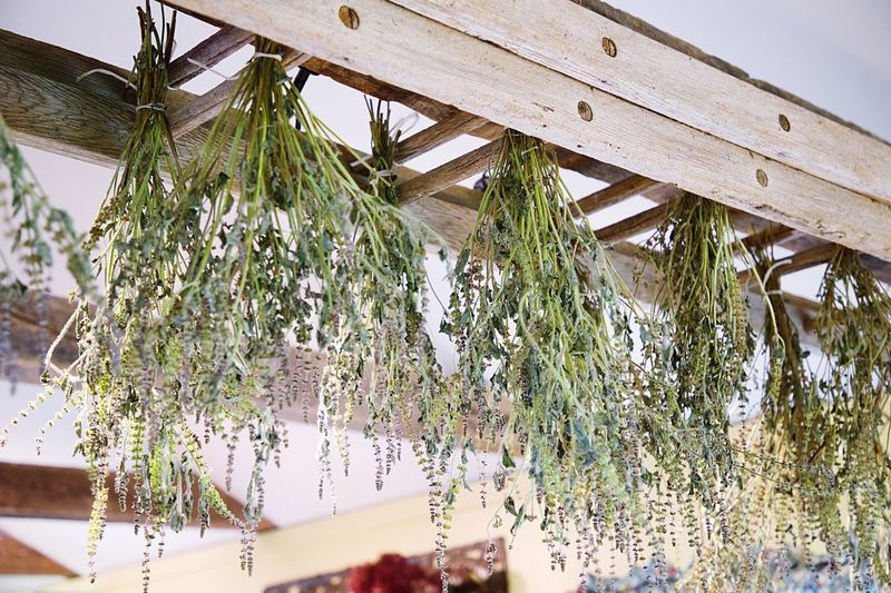 Plant Growth Architecture Built Structure Nature Day Tree No People Low Angle View Outdoors Greenhouse Green Color Freshness Leaf Sky Plant Part Sunlight Ceiling Plant Nursery
