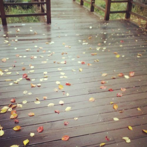 낙엽 Fall